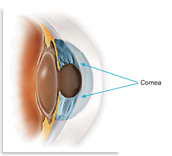 Specialty Eye Care What is the Cornea? - Specialty Eye Care